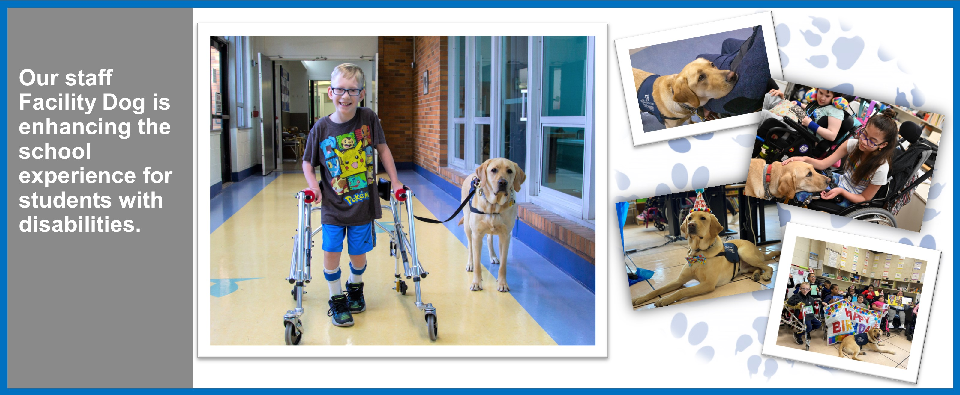 Our staff Facility Dog is enhancing the school experience for students with disabilities.